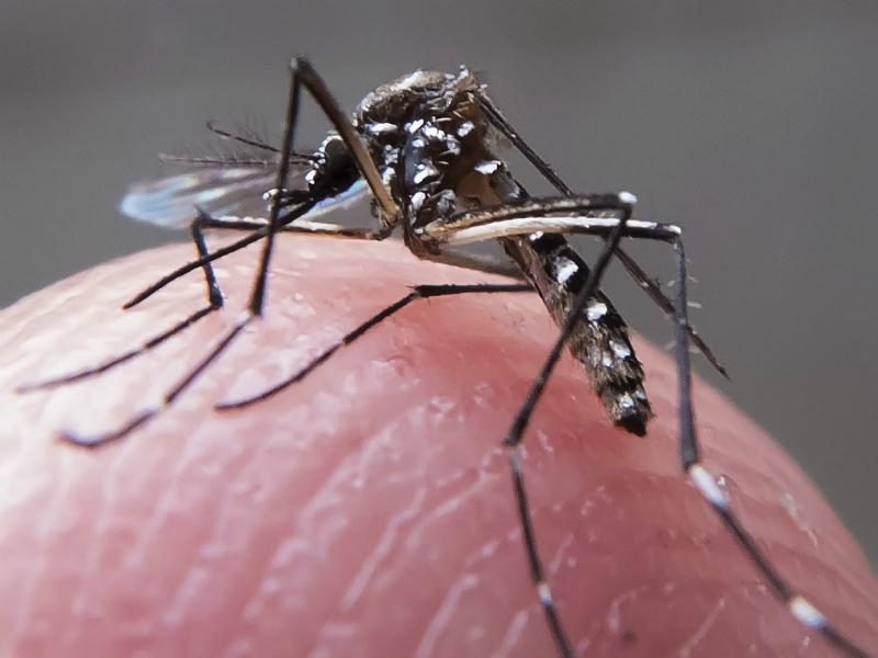 Doenças transmitidas pelo Aedes aegypti são perigosas. Saiba como se prevenir