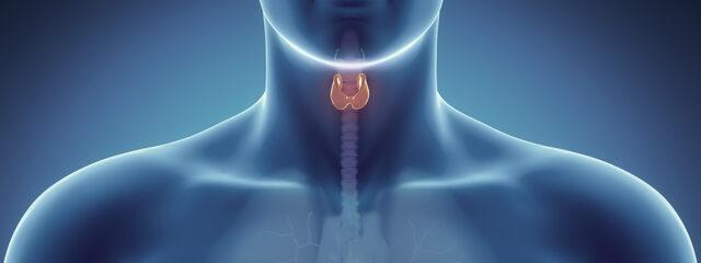 Doenças da tireoide: quais são os exames recomendados?